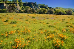 _MCW2763 (MCW Photography 1) Tags: livermore poppy fields hills