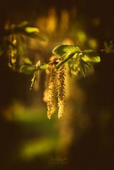 Stalactite (Weblody) Tags: bokeh fleur nature dordogne couche goldenhours à lextérieur