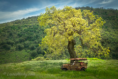 Hungry commuter  :) (Laura Macky) Tags: green trees landscape truck abandoned
