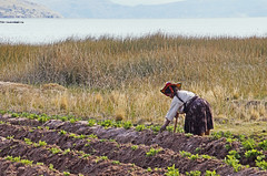 18 2768 - Pérou, lac Titicaca, péninsule de Capachica (Jean-Pierre Ossorio) Tags: pérou titicaca campagne travauxdeschamps paysan