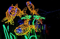holiday fishes (JoelDeluxe) Tags: rol riveroflights abq biopark nm december 2018 albuquerque biological park pnm light display colors lights sculptures fantasy newmexico hdr joeldeluxe