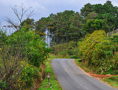 Mountain road in Dalat, Vietnam (phuong.sg@gmail.com) Tags: asia autumn central curve dalat danang destinations eco famous flowers grass green high highland landmark landscape locations mountain natural nature northern outdoor overview pass place road route sapa scene scenery serpentine sightseeing silence sky stationary street sunny tourism tranquil travel valley vehicles vietnam