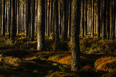 Light and Shawdow in the Forest