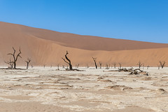 _RJS4633 (rjsnyc2) Tags: 2019 africa d850 desert dunes landscape namibia nikon outdoors photography remoteyear richardsilver richardsilverphoto safari sand sanddune travel travelphotographer animal camping nature tent trees wildlife