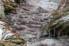 ZapfenStreich (Panasonikon) Tags: panasonikon lumixdmcg81 gvario45175 bach wasser water river eis ice eiszapfen harz winter