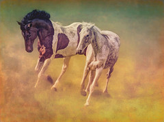 Wild horses (warrencarl) Tags: ipad warrencarl apple app manipulation effect edited enhancement stylized textures filters layers art artistic photocomputerart photoart gettyimages procreate snapseed touchretouch stackables tangledfx pseudo tonemapping painterly