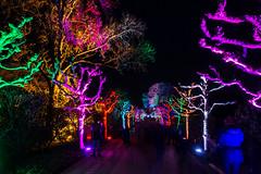 Grugapark Essen (Richter.V) Tags: grugapark gruga parkleuchten illumination park botanischergarten baum bäume sträucher licht beleuchtung nacht nachtaufnahme farben linien muster