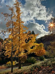 """""""Natures Gold Strike"""" (bradhodges09) Tags: nature sunflare sunbeams sunlight clouds dramaticsky fallleaves fallcolor fall goldenhour goldenleaves autumnleaves autumncolor autumn"""
