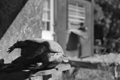 Abandoned Inventory (macromary) Tags: analog florida foma fomapan fomapan100 blackwhite analogphotograph bokeh bw blackandwhitefilm filmcamera film mechanicalcamera vintage vintagecamera urbex rurex flurbex abandoned fl volusiacounty volusia taxidermy taxidermist armadillo stuffed stuffedarmadillo