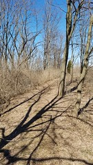 Chadwick Arboretum and Learning Gardens (dankeck) Tags: tree shadow path ohiostate theohiostateuniversity arboretum chadwickarboretum columbus ohio centralohio franklincounty