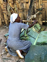 Ethiopia (Omo Valley-Chencha village) Dorze tribe knows how to make a bread from false babana leaves (ustung) Tags: dorzetribe woman ethiopian starch bread leaves banana false village chencha omovalley ethiopia