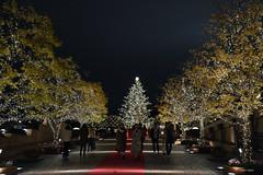 Ebisu garden (Aerisabel) Tags: tokio japan tokyo shibuta night christmas lights blue travel asia tree