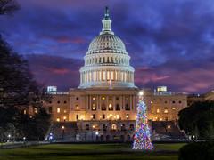 Before Sunrise at the Capitol (Insite Image) Tags: unitedstatescapitol capitol dome uscapitol christmastree bluehour sunrise christmas rotunda washington dc washingtondc dawn architecture cityscape city