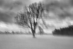 Spirit of Trees (3) (Ger208k) Tags: ireland dublin icm intentionalcameramovement blackandwhite malahide park trees abstract bnw monochrome multipleexposure gerardmcgrath minimalism