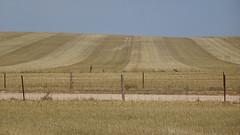 0429 Stoppelfeld bei - stubble fiels near; Mallala (roving_spirits) Tags: australia australien australie southaustralia