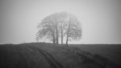 the other misty copse (Redheadwondering) Tags: sonyα7ii salisburyplain wiltshire trees christmas landscape track byway charltonclumps copse mist misty blackwhite bw minolta minolta100200mm dxofilmpack5