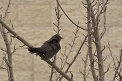 DSC_4242 (Deborah Kotovsky) Tags: bird nature nikond7200 nikon