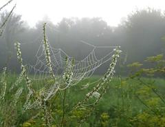 Fog Catcher (jmunt) Tags: spiderweb landscape fog