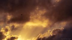 -3-2560px.jpg (countchristo) Tags: ©2019chriscope firebird sunrise sunrays backlight bird sky phoenix dawn clouds