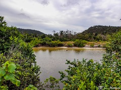 180802-17 La jungle (2018 Trip) (clamato39) Tags: olympus jungle nature kohrong cambodge cambodia asia asie île island river rivière eau water ciel sky mountains