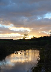 Golden sunset (simon edge) Tags: nikon d5100 sigma 1750mm sunset msice stitched verticalstitchedpanorama water reflections ducks chesterfieldcanal