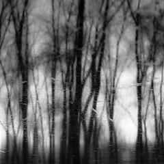 Trees In Water 150 (noahbw) Tags: d5000 dof nikon ryersonwoodsforestpreserve abstract blackwhite blackandwhite blur branches bw depthoffield dreamlike dreamy forest landscape monochrome natural noahbw reflection square treetrunk trees water winter woods