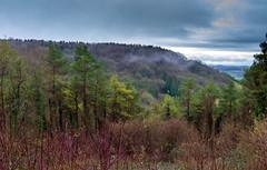 Peak Hill-1-11 (Sheptonian) Tags: somerset rural scenic landscape trees fauna grassland