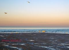 Soleil couchant à Dunkerque (louis.labbez) Tags: mer 2019 labbez nord dunkerque février 59 town ville harbour sea ciel sky bleu plage sable sand sun soleil couchant orange oiseau mouette bird seagul hautsdefrance france