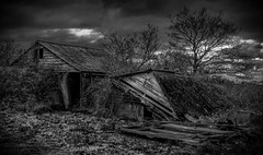 When Nature Takes Over (Ian Rowing) Tags: flickerfriday monochrome abandoned building farm