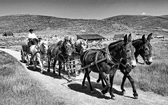 Bodie CA (81) (kevystew) Tags: california monocounty bodie ghosttown statehistoricalpark nationalregister nationalregisterofhistoricplaces nationalhistoriclandmark