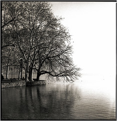 (J.Vergès Photography) Tags: rolleiflex planar trix film carlzeiss 80mm f28 rodinal tree monochrom bw annecy france arbre pelouse forêt lake lac sepia kodak