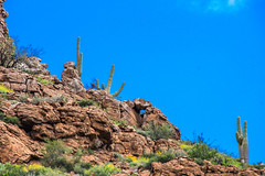 Rams Head (Buck--Fever) Tags: arizona arizonaskies arizonadesert arizonapassages arizonawonders earthnaturelife bluesky nature landscape canon60d tamron18400lens saguaros saguaro superiorarizona oldus60