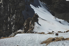 Urus Mount - Peru (TLMELO) Tags: alpamayo peru climb mountaineer montanha walking mountain peak ice glacier ishinca urus huaraz cordilheira massif andes peruvian peruanos montanhista huascaran