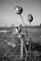 A beautiful Sculpture at the local disused quarry (charlottejarvis@live.co.uk) Tags: thechilterns sculpture art england uk tring blackandwhite