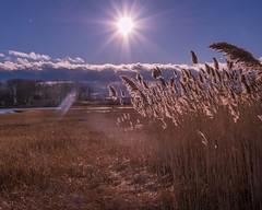 Marsh View [Explore Feb 24, 2019] (Bud in Wells, Maine) Tags: reeds marsh sun backlight wellsreserve estuary webhannetriver wells maine muskietrail phragmites splittoning hss