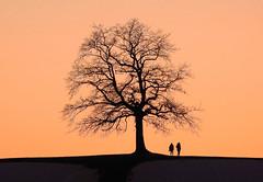 branchy (Claude@Munich) Tags: germany bavaria upperbavaria münsing badtölzwolfratshausen tree singletree branchy silhouette sunset evening people two orange claudemunich bayern oberbayern baum einzelbaum verästelt verzweigt sonnenuntergang abends abend abendstimmung himmel wolken paar zwei