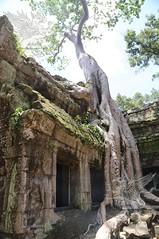 Angkor_Ta Prohm_2014_18