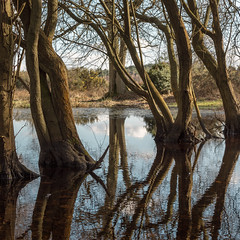Back to the woods 174/365 (tonysummers1) Tags: woodlandphotography woodland reflections reflection 365project stokecommon