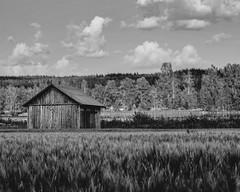Shed (Jesse Väisänen) Tags: wallpaper black white blackandwhite monochrome finland suomi landscape dof bokeh sky clouds cloudy atmospheric atmosphere nature