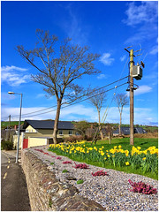 Approaching Arthurstown (JulieK (thanks for 8 million views)) Tags: htmt htt telegraphtuesday iphonese arthurstown wexford ireland irish telegraphpole tree daffodils wall hww flowers bluesky treemendoustuesday wallwednesday
