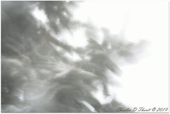 Blizzard Pine (ctofcsco) Tags: 05 300mm 5d 5dclassic 5dmark1 5dmarki aperturepriorityae canon explore geo:lat=3888043862 geo:lon=10478760537 geotagged image landscape nature papeton colorado didnotfire digital ef28300mmf3556lisusm eos eos5d esplora evaluative explored f220 flashoff iso50 photo pic pretty renown superzoom unitedstates usa