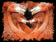 _MGL5853 Heartly greetings (SØS: Thank you for all faves + visits) Tags: birds cariberflamingophoenicopterusrubber danmark digitalart digitalartwork art kunstnerisk manipulation solveigøsterøschrøder artistic draw flamingo fugle paint photomanipulation zoo zoologiskhavekøbenhavn 300views 500views 1000views inexplore 5000views
