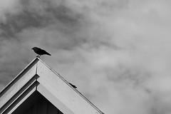 looking around (EllaH52) Tags: roof lines bird house building sky grey clouds monochrome blackwhite minimalism