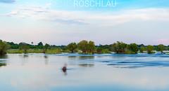 5s Hippo yawn (Denis Roschlau Photography) Tags: flusspferd hippopotamusamphibius nilpferd grosflusspferd hippopotamus hippo zambezi zambia sambia simbabwe zimbabwe sambesi säugetier mammal river water longexposure nature landscape sky clouds wildanimal wildlife africa safari
