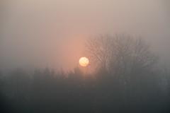 20190329 (Homemade) Tags: vivitar70210mmf35series1 sunrise morning mist fog trees sky sun grove wantage southoxfordshire oxfordshire valeofthewhitehorse