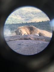 IMG_2938 (suuzin) Tags: masai mara safari
