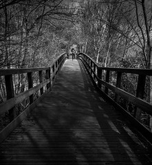 Bridge (paullangton) Tags: mono bw blackandwhite ware hertfordshire nature bridge walk trees shadow landscape reserve