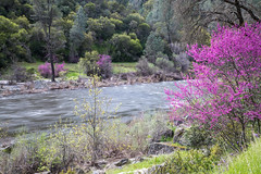 Merced Wild and Scenic River (blmcalifornia) Tags: river findyourway trackthebloom spring california mercedriver nature naturephotography outdoors outdoorphotography wildflowers beauty recreation hiking mountains