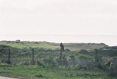 CNV00017 (rugby#9) Tags: usa sky cloud bird condor buzzard us america grass fence land california