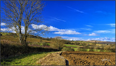 Blue Day.3.Ploughed. (Picture post.) Tags: landscape nature green bluesky trees fields countryside hedge clouds hills shadows winter paysage arbre